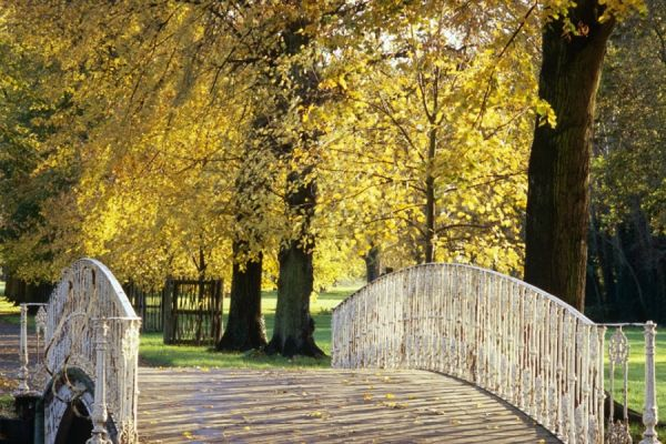 See the Autumn Colours at: Morden Hall Park